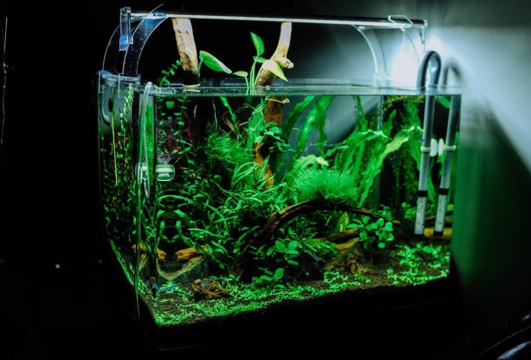Akvaarium, taimed, kalad
