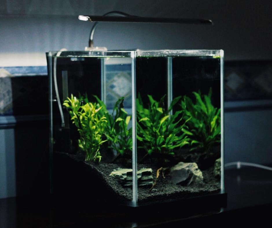 akvaarium taimede ja kaladega