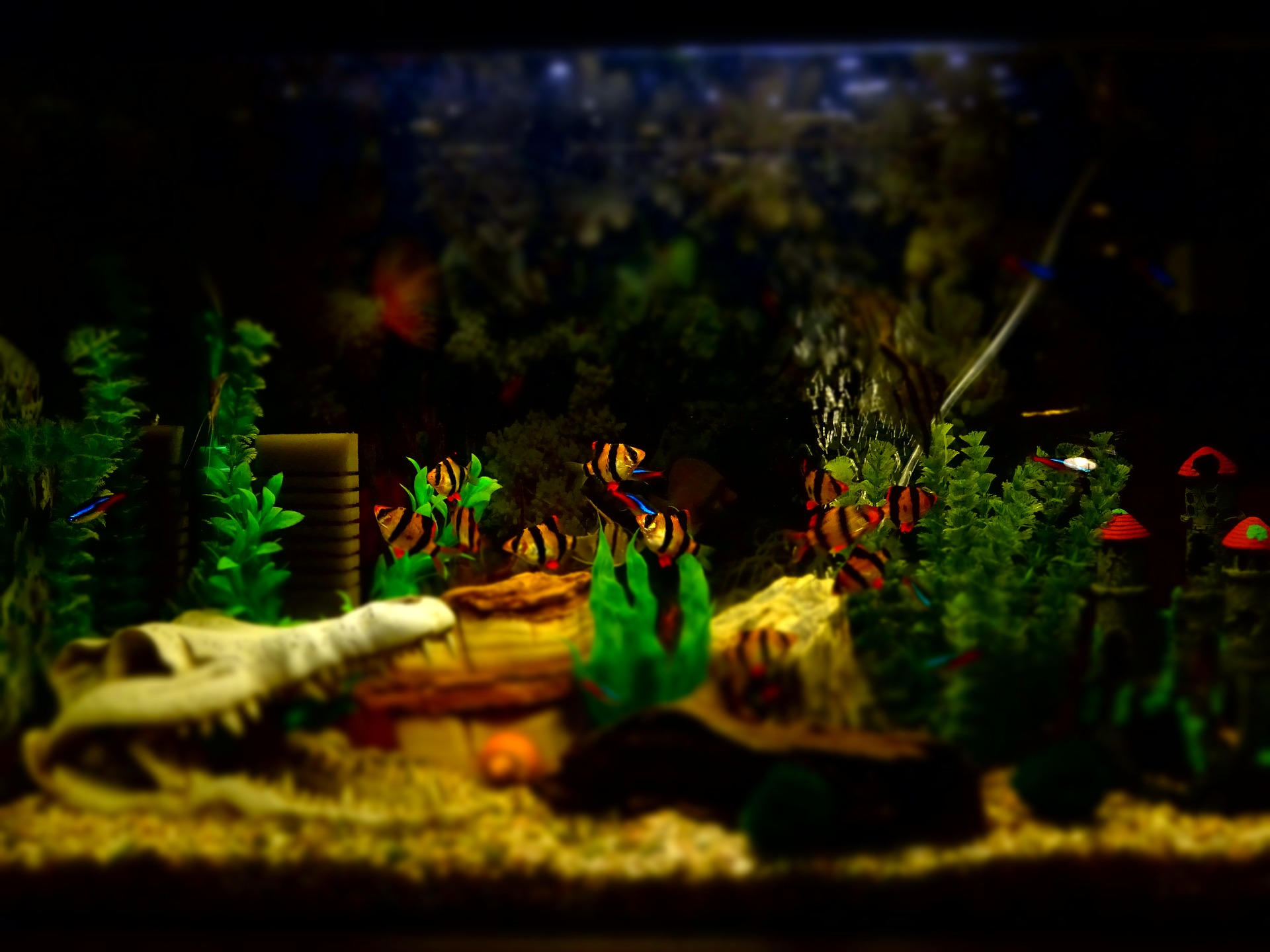 Pilt, vana akvaariumi sündroom, koos kaladega